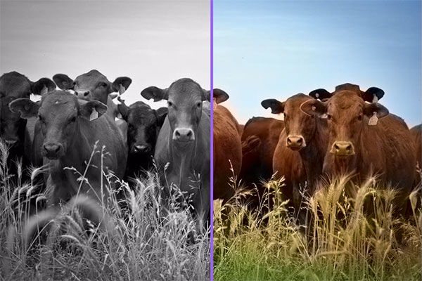 Black-and-White Photos Are Colorized By Artificial Intelligence
